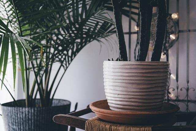 Piante da appartamento per l'interior design