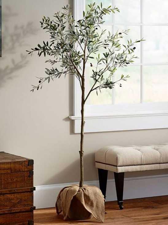 Un olivo in casa, da mydomaine.com