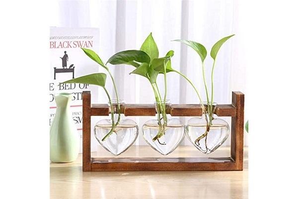 Vasi per piante in idrocoltura da Amazon