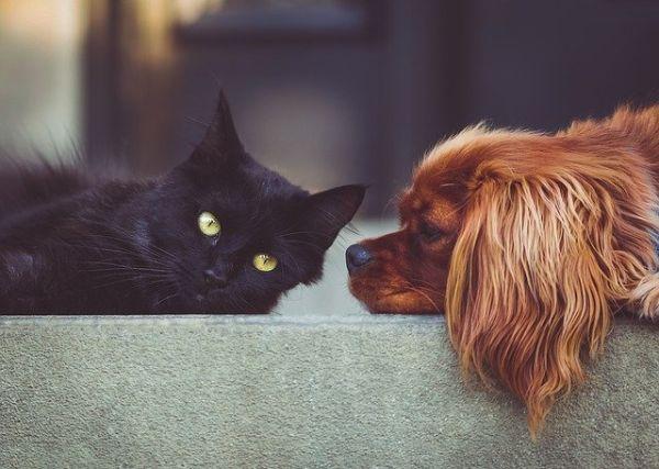 Come prendersi cura di animali domestici ai tempi del Coronavirus