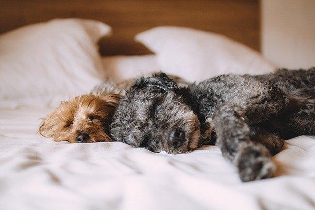 Animali domestici e Coronavirus