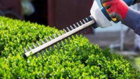 Le siepi in giardino: consigli per la cura e l'irrigazione