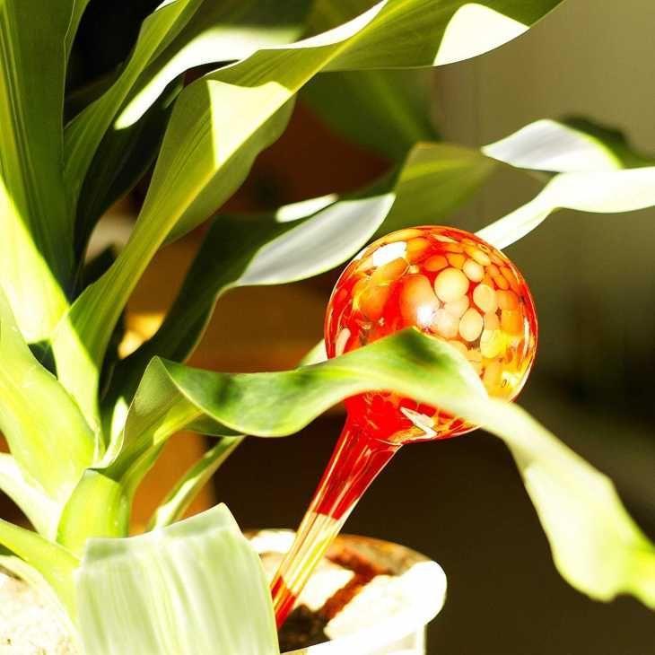 Sfere in vetro con acqua all'interno per irrigazione piante su Amazon