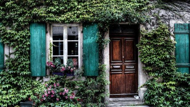 Consigli per la cura di piante rampicanti fiorite e sempreverdi