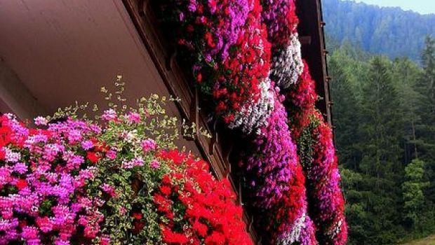 Le più belle piante a fioritura primaverile