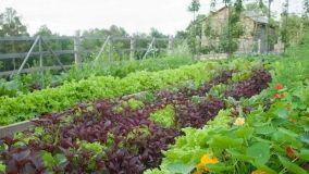 Orto in casa: i consigli per la coltivazione