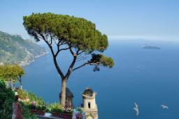 Pino mediterraneo causa di accumuli di foglie aghiformi