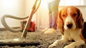 Aspirapolvere animal care: modelli innovativi ed efficaci