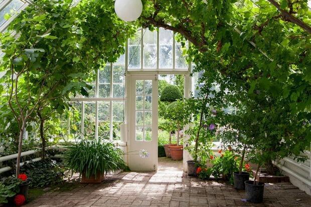 Serra solare per piante