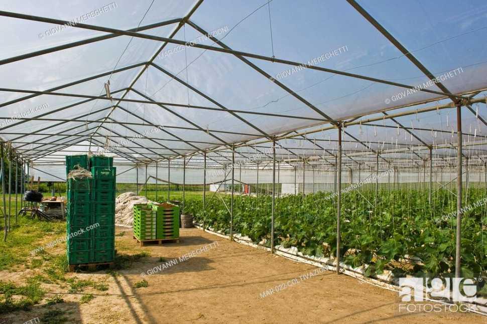Serra solare, coltivazioni