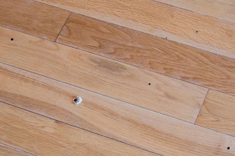 Pavimento in legno tarlato: come intervenire con Lignum AT di HDG Group