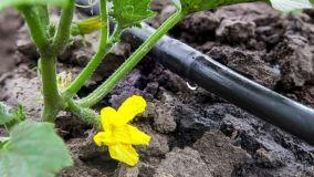 Irrigazione a goccia: come funziona e installazione fai da te