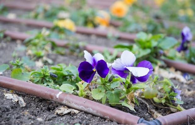 Irrigazione a goccia fiore