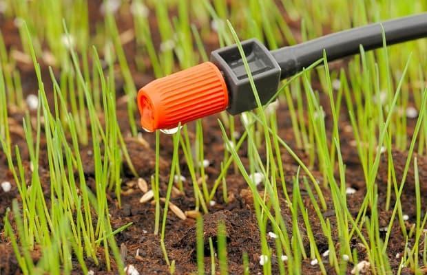 Irrigazione a goccia gocciolatoio