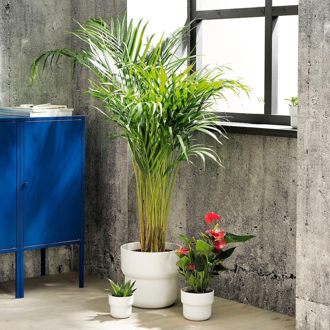 Pianta artificiale in vaso FÖRENLIG - Design e foto by Ikea