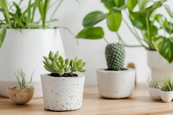 Piante da libreria: perfette le piante grasse