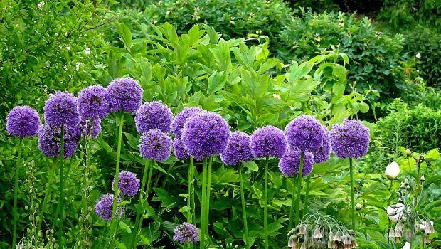 Quali piante scegliere per creare un orto ornamentale