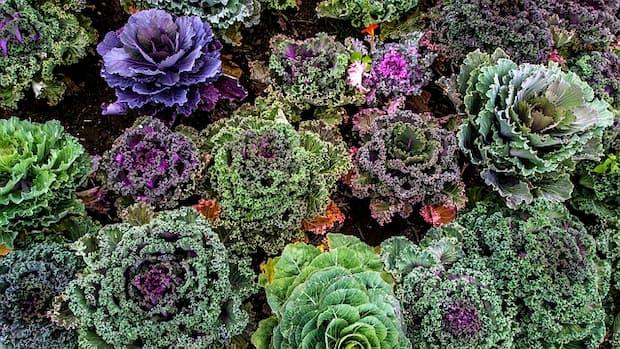 Quali piante scegliere per avere un orto ornamentale
