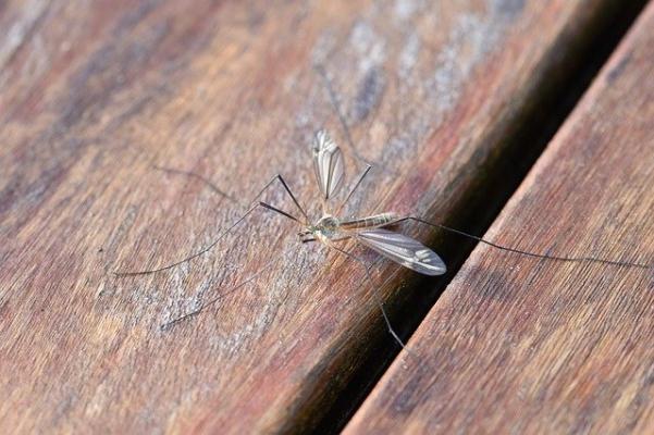 Come trattare lo spazio verde per allontanare le zanzare