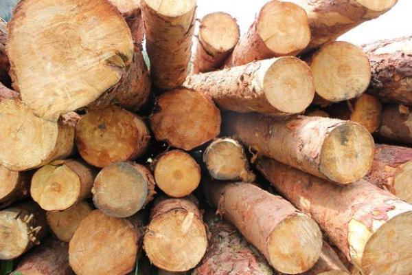 Tronchi di legno, essenze