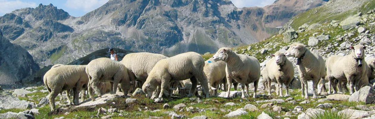 Lana di pecora, Naturtherm
