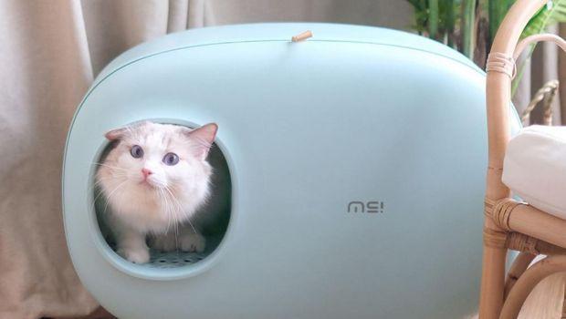 Toilette per gatti: igiene e design dentro casa