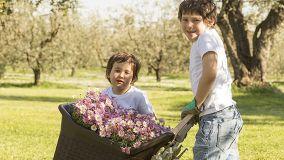 Carrello da giardinaggio e per mille altri usi