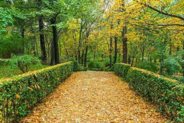 Raccolta foglie secche
