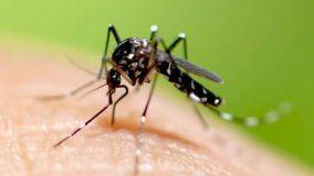 Come difendersi dalle zanzare in casa: i metodi più efficaci
