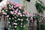 Piante sul balcone rosa da tipsmake.com