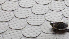 Nuove texture ceramiche