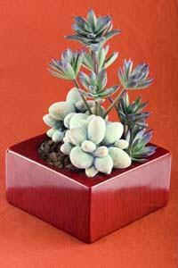 Contenitore piante