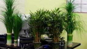 Importanza del verde negli ambienti interni