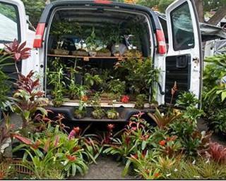 L'importanza della presenza del verde negli ambienti interni: la grande varietà di piante da interno