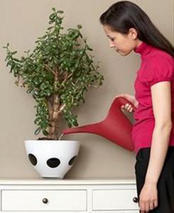 L'importanza della presenza del verde negli ambienti interni: un momento di relax dedicato alla cura del verde