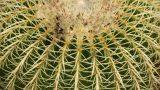 Cactacee e Succulente