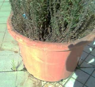 Balconi e terrazze verdi senza problemi: microfessurazioni prodotte dal peso eccessivo del vaso