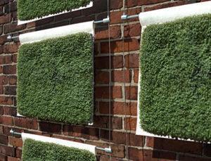 Pannelli Muro vegetale