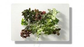 Quadri vegetali indoor
