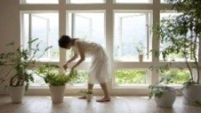 Piante da interni e depurazione dell'aria