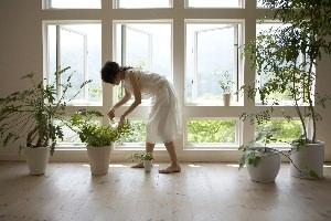 Vasi di piante all'interno di un'abitazione