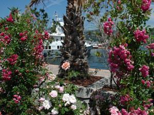 Yacht and garden_2