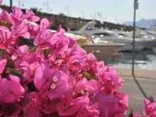 Yacht and garden_4