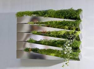 Specchio d'erba