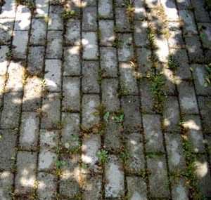 Cura delle pavimentazioni in massello: giunti mal sigillati con crescita di essenze erbacee