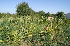 vista con piante di impianto di Fitodepurazione