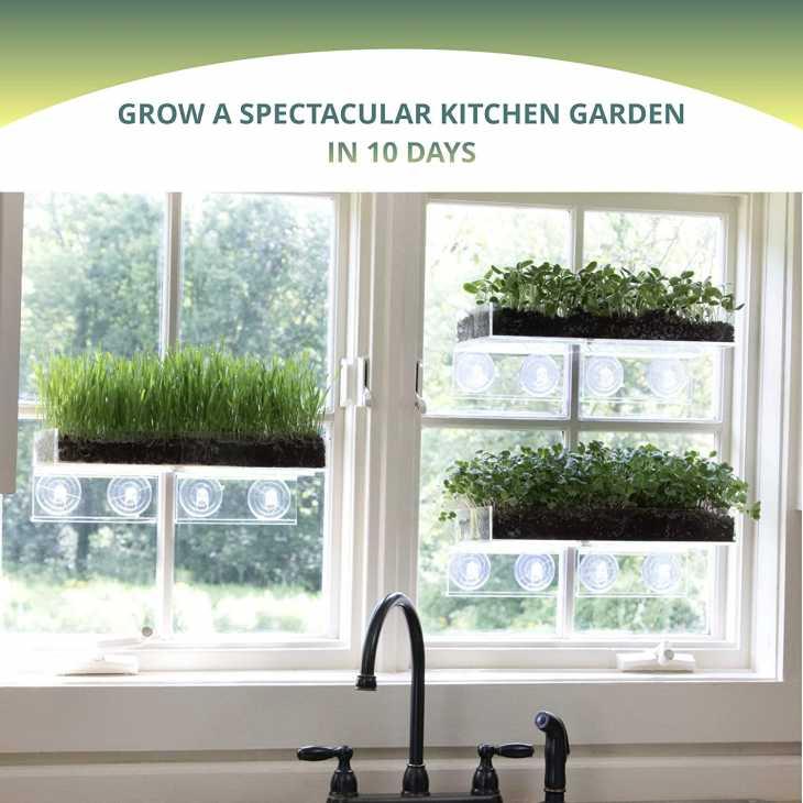 Kit micro giardino su Amazon