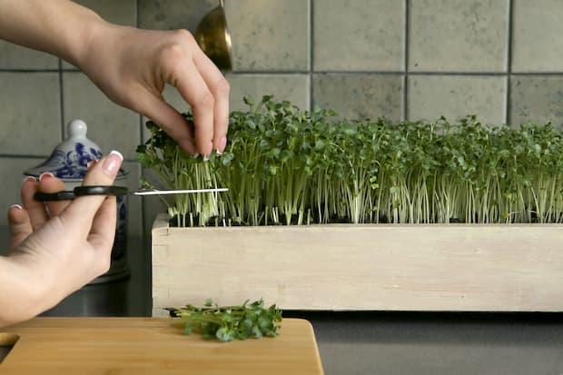 MIcro gardening: che cos'è e come funziona
