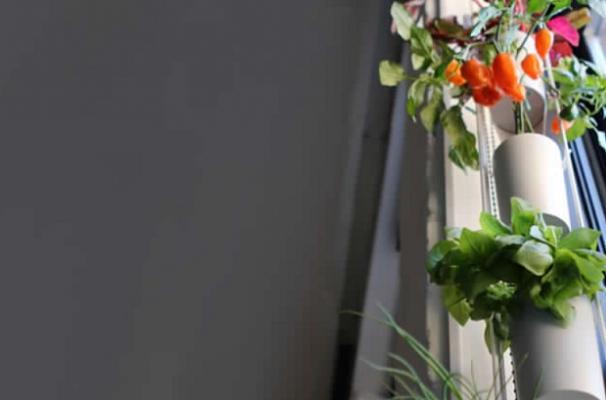 Micro giardini - Windowfarm