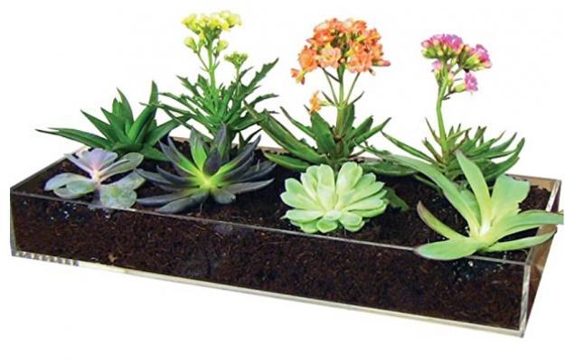 Micro garden - Amazon